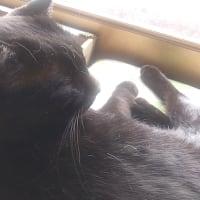 黒猫の欠点。