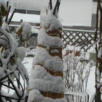 名残り雪の春です