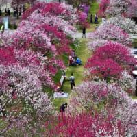 花も下での春のひととき