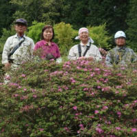 亀石山でミヤマキリシマ