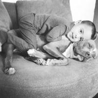 犬と子供の接し方について 5 犬の飼い主免許教科書より