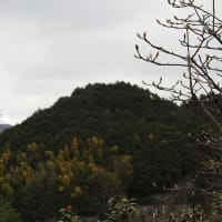 霊園山(りょうおんざん)・聖林寺