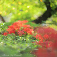 西川緑道公園の秋