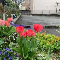 4月になりました【福岡市社交ダンス教室・福岡市社交ダンススタジオ・薬院、渡辺通・福岡のダンススクールライジングスター】