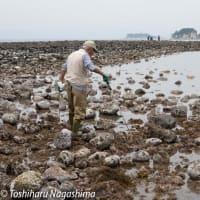 和賀江島 干潮で出現する最古の築港遺跡