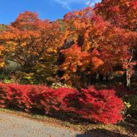 河口湖、紅葉最高!