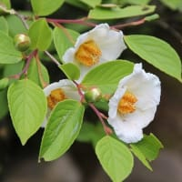 勧修寺に咲く花々