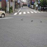 10月16日 本日は矢川駅北口で朝の市政報告を行いました