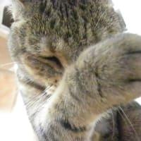 猫も手洗いに気を使ていますにゃ!