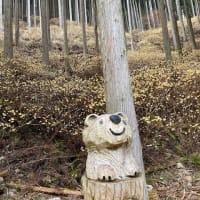 木谷のミツマタ2