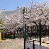 発令 et    桜咲く季節に・・・、周囲の人達の優しさに~、癒されております・・・