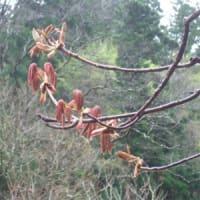 萌木色の森