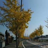 第三十二段~色づく銀杏並木を見て一句~