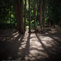 7/19 お気に入りの円山公園 空気が気持ち良い♫ 札幌写真館ハレノヒ