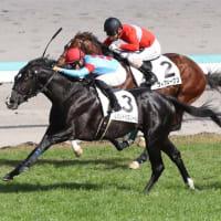 レゾンドゥスリール新馬勝ち