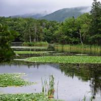 北の大地から 知床五湖(その1)
