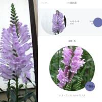 09月27日 近所の花