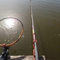 武蔵の池に行ってきた。段底やって宙釣りして
