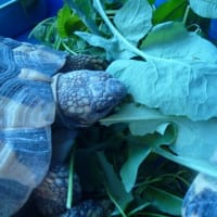 秋のノゲシ、シロツメクサ大盛期