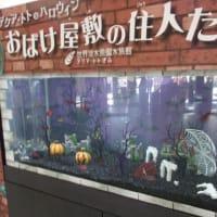 「ハロウィン水槽」🎃