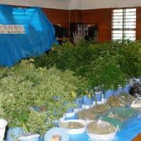 営利目的で大麻330株栽培の男を逮捕/横須賀