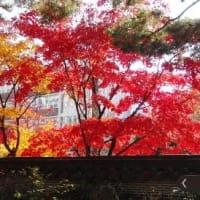 2018年11月13~16日 ソウル旅行の記録 S氏の日記と、ヌルボの写真&補足 [その2]池錫永家址・校洞小学校・雲峴宮など