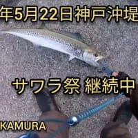 2020年5月22日 神戸沖堤防で魚釣り。サワラ祭り継続中ですよ!