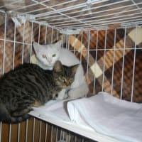 ノラさんが産んだ子猫2匹のその後