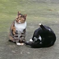 猫ちゃん兄妹の戯れ(上)