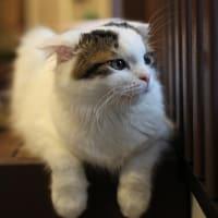 猫カフェ「猫家」 カメラのこと