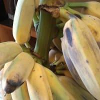 アロハガス産バナナ!