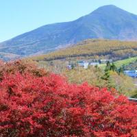 晩秋の北霧ヶ峰・・・白樺湖の紅葉