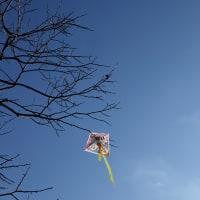 山田池公園の空 (1)