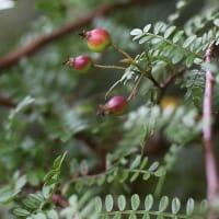 10月の木の実 - 安城デンパーク