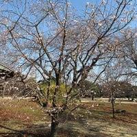 季節の花「十月桜(冬桜)」