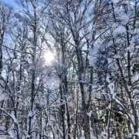 「北海道アイヌ政策推進方針(素案)」に関する意見 2021年2月25日