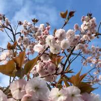 コロナ禍の春