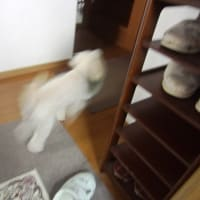 ライナスも一緒に一時避難をしました。