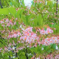 エゴノキの花に感心する <お花で一休み(75)>