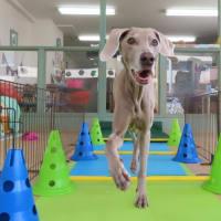 人&犬の温熱療法《温玉講習会》日程変更のお知らせ【ALOHA塾】  犬のしつけ教室@アロハドギー