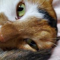 【227】れいにゃん堂のれいちゃん・ご機嫌にゃ&猫グッズ紹介😸