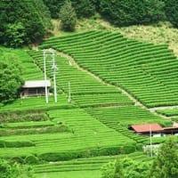お茶畑 (静岡県静岡市葵区)