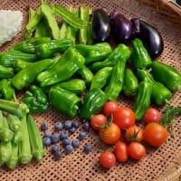 今日の野菜達