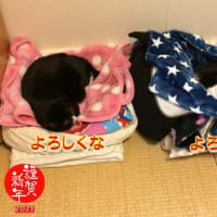 直次郎(なおじろう)と 桜(さくら)☆^^ Happy new year!!