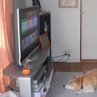 〜今テレビが〜