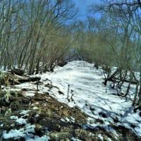 積雪の御前山 2019.4.13写真付き