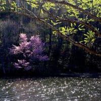桜と水と月はなかよし