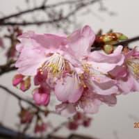 宮和田緑道にも春の気配