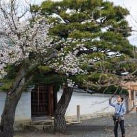 2019年春の京都・妙覚寺の壁紙(計10枚)