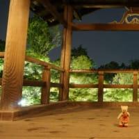 緊急事態宣言延長で開催が6月4日からになった「東福寺のライトアップ」。青紅葉が美しく浮かび上がる夜。